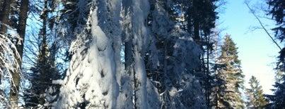Боровец (Borovets) is one of Ski Zones.