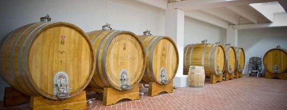 Cantine Vigne & Vini is one of Cantine Aperte Puglia 2012.