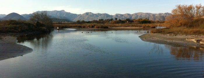 Reserva Natural de s'Albufereta is one of Mallorca Birdwatching/Ornithology.