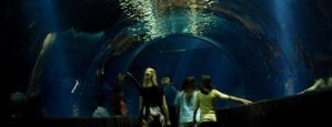Oklahoma Aquarium is one of Green Country Getaway, Let's Go!.