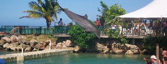 Dolphin Cove is one of Guide to the Best of Island, Jamaica.