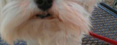 Houston Dog Friendly Patios
