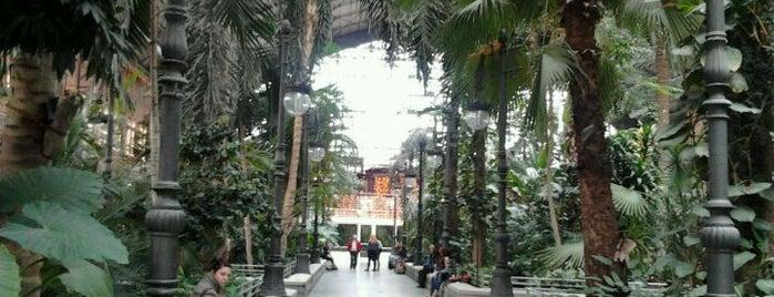 El Botanico is one of Terrazas Madrid.
