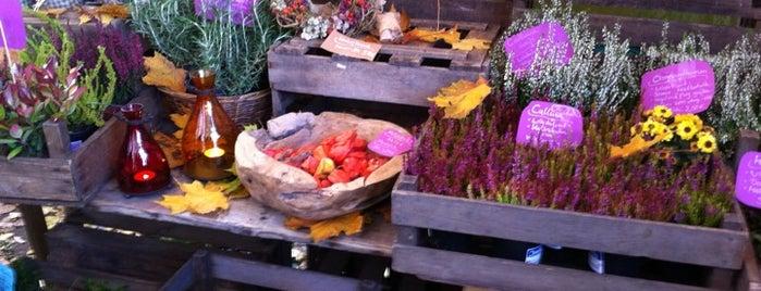Markets - Fruits & Food