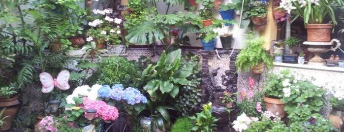 Casa-Patio de la calle Pozanco, 6 is one of Patios de la Zona San Lorenzo.