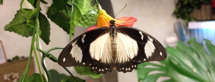 Музей живых бабочек «Тропический рай» is one of Н.