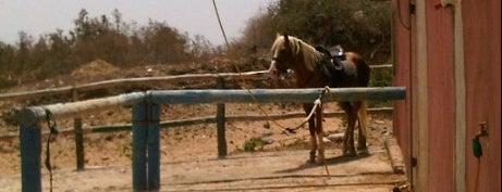 Ranch de Diabat is one of 36 hours in...Essaouira.