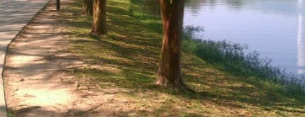 Lake Ella is one of Get out and enjoy the fresh air in Tallahassee.