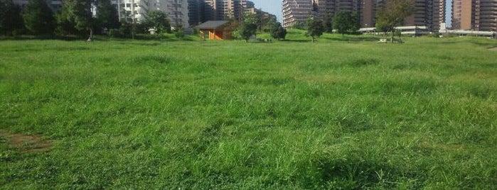 新浦安周辺の公園