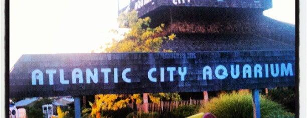 Atlantic City Aquarium is one of Things To Do In NJ.