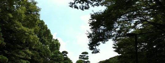 Yoyogi Park is one of Tokyo as a local.