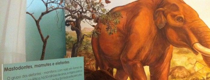 """Museu de Zoologia (USP) is one of Museus """"Lado B"""" de São Paulo."""