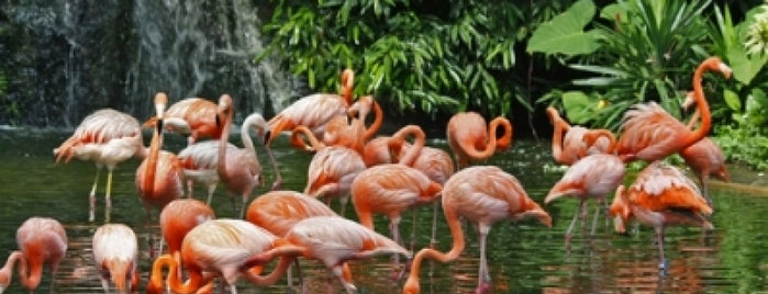 Jurong Bird Park is one of Singapore's Today.