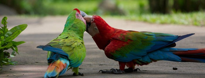 Bali Bird Park is one of BALI....
