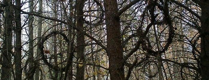 Adkins Arboretum is one of Underground Railroad & Heritage.