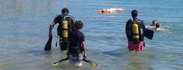 Platjeta del Port - Cala Calafat is one of Dive sites.