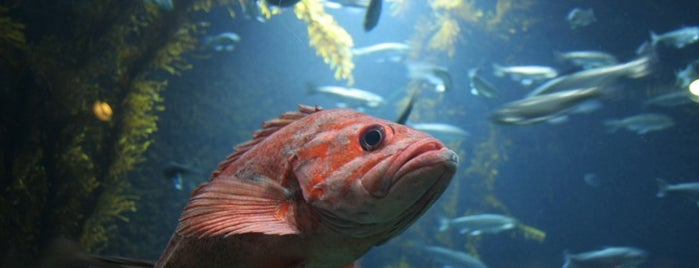 Oregon Coast Aquarium is one of Best Places to Check out in United States Pt 3.