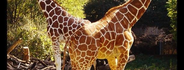 Brookfield Zoo is one of The Crowe Footsteps.
