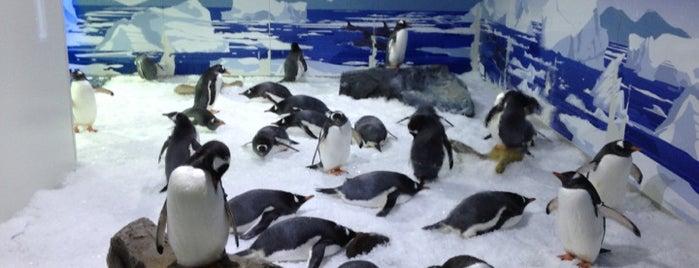 Kelly Tarlton's Sea Life Aquarium is one of NZ to go.