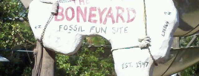 The Boneyard is one of Best Kept Secrets? of Disney.