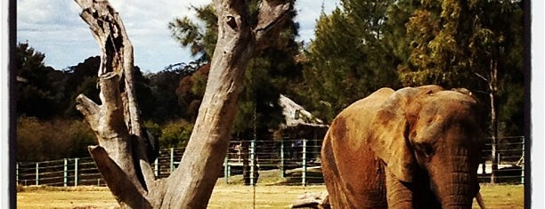 Taronga Western Plains Zoo is one of Great Family Holiday Attractions Around Australia.