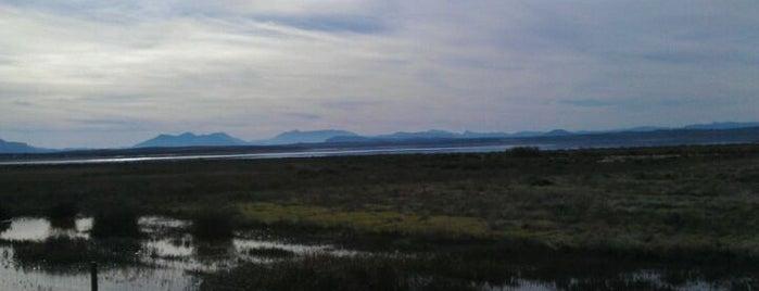 Laguna de Fuente de Piedra is one of 101 cosas en la Costa del Sol antes de morir.