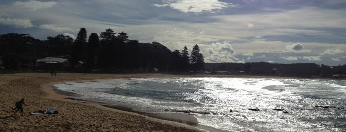 Avoca Beach is one of Glam dogs in Sydney.