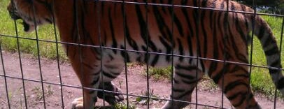 Calgary Zoo is one of Best of World Edition part 3.