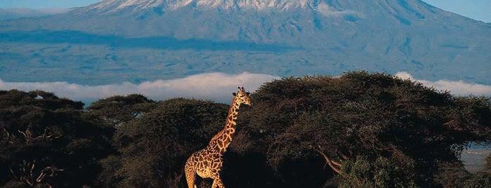 Mount Kilimanjaro is one of Bucket List ☺.