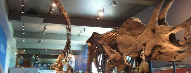 Natural History Museum of Los Angeles County is one of LA's To do list.
