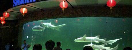 SeaWorld Indonesia is one of Jakarta. Indonesia.