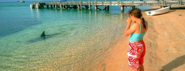 Monkey Mia Dolphin Resort is one of Top 20 Australian Beaches.