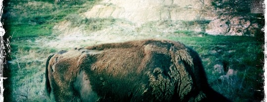 Theodore Roosevelt National Park is one of Best Places to Check out in United States Pt 3.