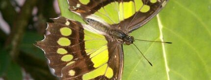 Butterfly World is one of Best of Greater Fort Lauderdale.