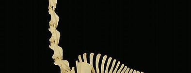 Museum of Osteology is one of To Visit in OKC.