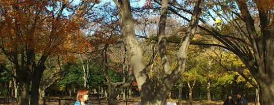 Yoyogi Park Dogrun is one of Tokyo-Sibya.