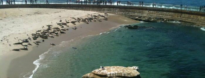 Children's Pool Beach (Casa Beach) is one of San Diego's 59-Mile Scenic Drive.