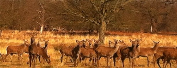 Richmond Park is one of London's best parks and gardens.
