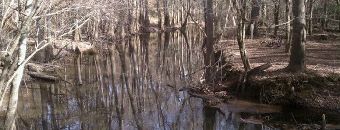 Congaree National Park is one of Visit the National Parks.