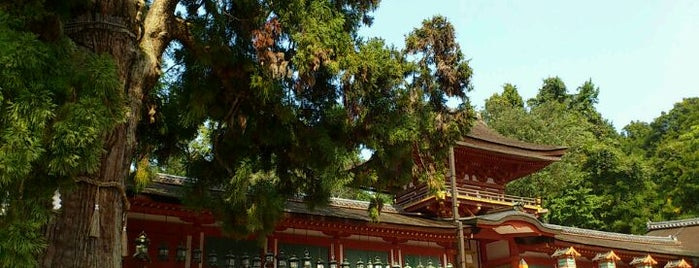 Kasuga-taisha Shrine is one of Best of World Edition part 3.