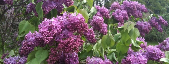 Lilac Festival is one of The Best Spots In Rochester, NY.