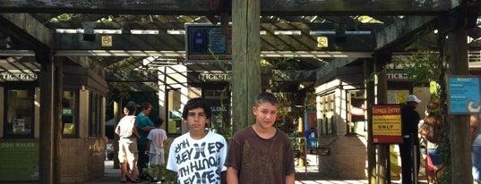 Zoo Atlanta is one of Atlanta's Best Entertainment - 2012.