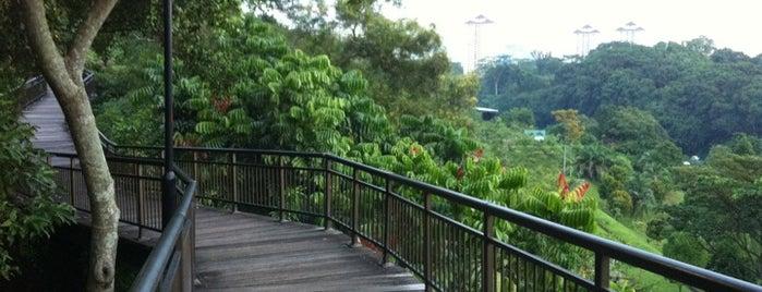 Canopy Walk is one of Trek Across Singapore.