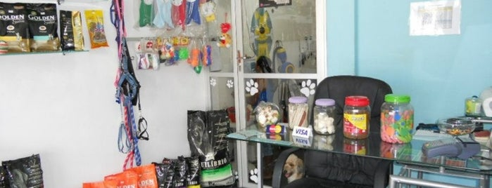 Petshop Star Dog is one of DANIEL.