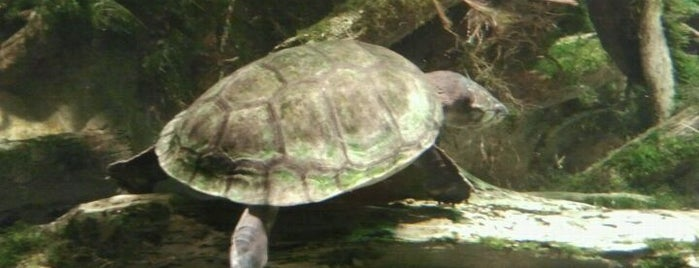 National Aquarium is one of Best Places to Check out in United States Pt 2.