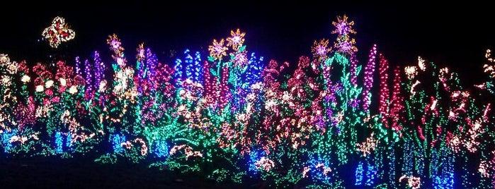 Bellevue Christmas List