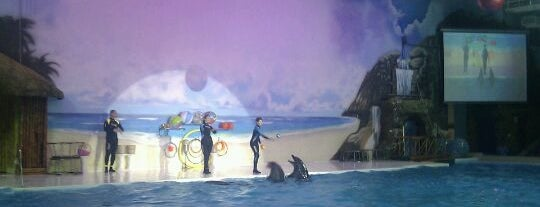 Dubai Dolphinarium is one of Best places in Dubai, United Arab Emirates.