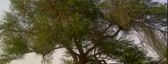 Tree Of Life is one of Relax in Bahrain.