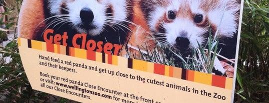 Wellington Zoo is one of NZ to go.