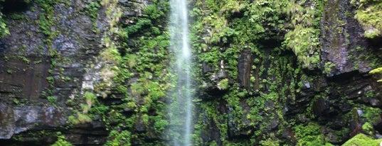 阿弥陀ヶ滝 is one of 日本の滝百選.